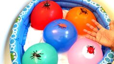 New Finger Family Song With Insects - Learn Colors Wet Balloons - Nurser...