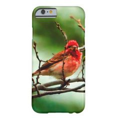 iPhone 6 Case With Colorful Bird Painting