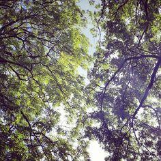 #Bielefeld #grün #Herbst