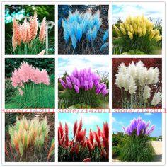 400 개/가방 pampas garss, pampas 씨앗, pampas 잔디 공장, 장식 식물 꽃 Cortaderia Selloana 잔디 씨앗 홈 정원