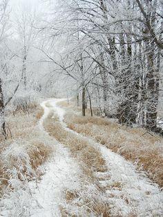 A beautiful winter trail