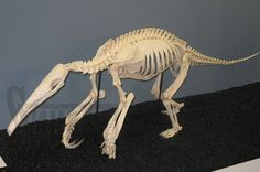 Ant Eater http://www.skullcleaning.com/userfiles/image/services_photos_58_large.jpg