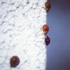 .@nichtschlechtfrauspecht | Unscheinbar .... MarienKäferLiebe..... Ihr seid aufgeflogen ;) #abcfee #ladybug