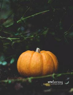Autumn Photograph Pumpkin Print Fall by BeresyPhotography on Etsy