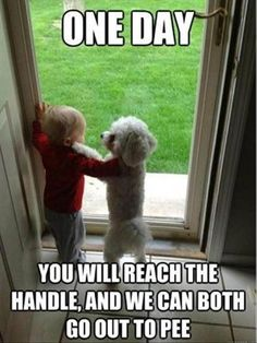 101 Best Funny Dog Memes to Make You Laugh All Day - Funny Dog Quotes - 101 best funny dog memes One day you will reach the handle and we can both go out to pee. The post 101 Best Funny Dog Memes to Make You Laugh All Day appeared first on Gag Dad. Funny Dog Memes, Funny Animal Memes, Cute Funny Animals, Funny Animal Pictures, Funny Cute, Funny Shit, Funny Dogs, Cute Dogs, Funny Photos