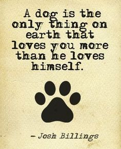 Pets are the best partners. Among pets the most faithful and loyal is dog. There are so many breeds of dogs loved by pet lovers. New dogs must be trained to be a part of your family. Dog Quotes Funny, Funny Dogs, Puppy Love Quotes, Best Dog Quotes, Dog Sayings, Funny Humor, Rescue Dog Quotes, Pet Quotes Dog, Pet Humor