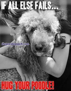 When in doubt hug your Poodle Did you hug your Poodle