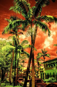 """Naples, Florida - love this effect! Very """"Florida"""". Visit Florida, Old Florida, Vintage Florida, Naples Florida, Florida Beaches, Florida Usa, Miami, Aspen, Wonderful Places"""