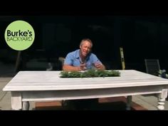 Zucchini growing and cooking tips - Burke's Backyard