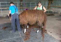 Image result for llama packs Shearing, Packing, Image, Bag Packaging