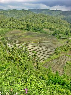Flooded Rice Fields, North Bali, Indonesia Green Landscape, Ubud, Brunei, Southeast Asia, Cambodia, Places Ive Been, Philippines, Fields, Singapore