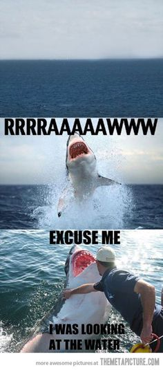 funny shark attack