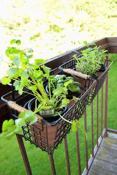Balcony Hanging Plants, Hanging Herb Gardens, Balcony Herb Gardens, Herb Garden Planter, Balcony Planters, Small Herb Gardens, Diy Herb Garden, Patio Plants, Outdoor Gardens