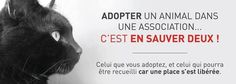 Adoptez plutôt qu'acheter!