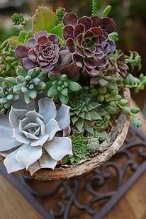 Succulent planter, in Texas. *indoor by big window* Succulents In Containers, Cacti And Succulents, Planting Succulents, Cactus Plants, Planting Flowers, Succulent Gardening, Garden Pots, Container Gardening, Potted Garden