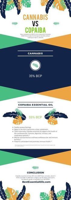 doTERRA Copaiba Essential Oil vs Cannabis or CBD Oil Copaiba Oil Uses, Copaiba Essential Oil, Essential Oil Uses, Doterra Essential Oils, Young Living Essential Oils, Elixir Floral, Cannabis, Endocannabinoid System, Doterra Oils