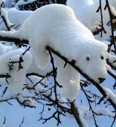 Nature made a snow-bear! Polar bear sculpture created by snow accumulated on a branch. Via FB Winter Magic, Winter Fun, Winter Season, Winter White, Snow Scenes, Winter Scenes, Ice Art, I Love Snow, Snow Sculptures