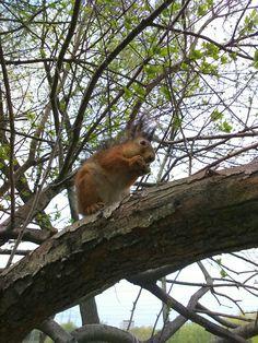 Белка на дереве  #белка #природа