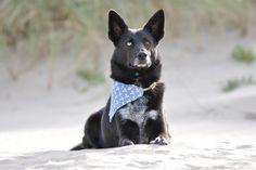 Urlaubstip mit Hund - Nordholland