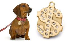 Miles totally wants this gold and bling dollar sign ID tag because he's flashy like that (and doesn't realize he's part of the 99%)