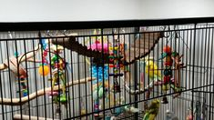 Fixing ladder in budgie aviary Parakeets, Parrots, Monk Parakeet, Ladder, Birds, Animals, Stairway, Parakeet, Animaux