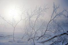 Hiver, neige, branches d'arbres, le soleil, brouillard, givre Wallpaper - ForWallpaper.com