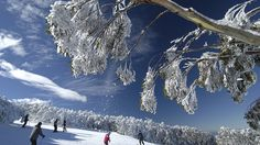 Mt Baw Baw has opened a week early thanks to record snow fall