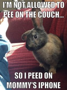 iPhones can take a good pee. #rabbit #rabbits #cuteanimals #cuteanimal #bunny #bunnies #pet #pets