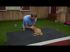 Lucky Dog- Submissive Groot - YouTube