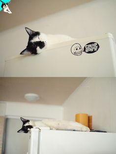 냉장고 위는 내 차지야~/yy