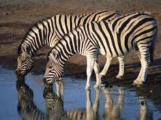 hayvan resimleri ile ilgili görsel sonucu