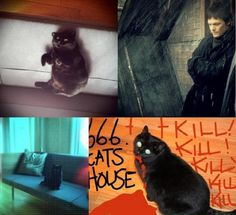 norman reedus cat | Norman and his cat Eye in the Dark | Norman Reedus