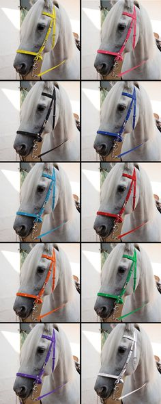 Biothane endurance halter with reins. Smooth halter for raid, abrasion resistant, flexible and incredibly solid. Broad range of colours to choose from. € 110 Sold at marjoman.net