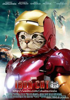 En China, el gato Zhumao Kele se está haciendo famoso - Iron Man