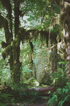 Destination PNW: Hoh Rainforest – Free People Blog | Free People Blog #freepeople