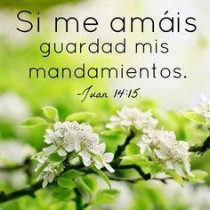 Juan 14:15 Si me amáis, guardad mis mandamientos.