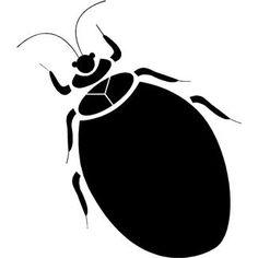 Pest Control Around Your Home