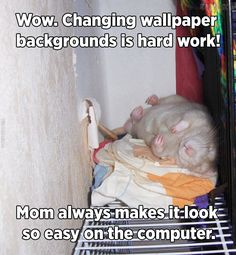 Rat helps changing wallpaper
