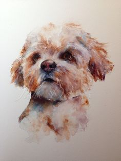 toy dog, a watercolour painting by artist jane davies