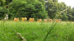 Bienen im Clara-Park