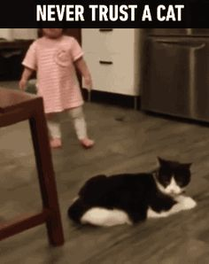 "Share this ""Never trust a cat"" animated gif image with everyone. Gif4Share is best source of Funny GIFs, Cats GIFs, Dog GIFs to Share on social networks and chat."
