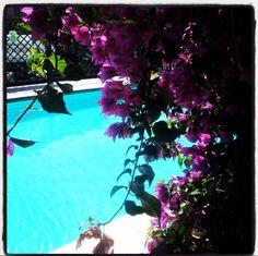 Dietro la bouganville...il turchese..   #finaleligure #hotelflorenz #swimmingpool #view #beautiful #scenery #landscape #amazing #music #welcome #passion #summer #holidays #liguria #riviera #italy