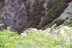 Camino a Laguna Negra - Bariloche