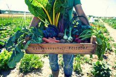 meine ernte: Hier erfahren Sie alles Wissenswerte rund ums Gemüse