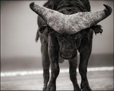 Believe it or not this is one of my faves of all of Nick Brandt's photos that I've seen.