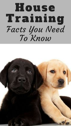 What is house training? How long does house training take? How often does a puppy need to toilet? Find the basic questions of house training answered here.