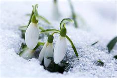 Spring is on it's way. #Jitka Slamova Photography