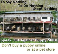 Don't buy from breeders while homeless animals die in shelters.  Stop puppy mills.