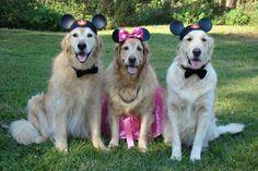M I C ...K E Y  M O U S E :)   Tyler,Brie and Bentley