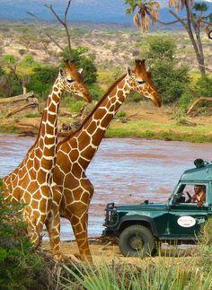 Safari in Kenya, Africa